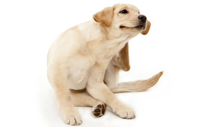 Pet dander, How Do Pet Allergens Occur